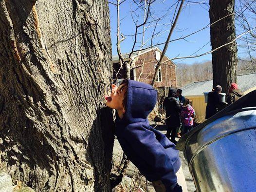 Maple Sugaring Festival