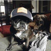 National Dog Day - AZ Gives Back Day