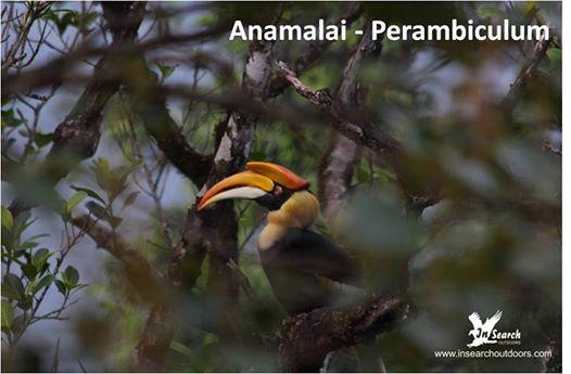 Anamalai - Perambikulum