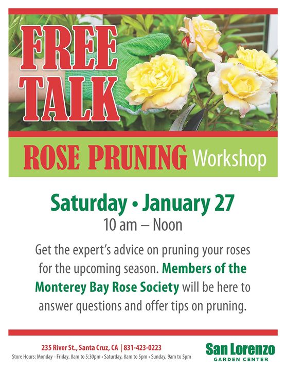 Exceptionnel Free Talk! Rose Pruning Workshop