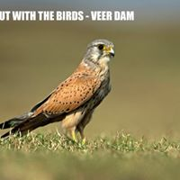 A Day Out with the Birds - Veer Dam April 2018