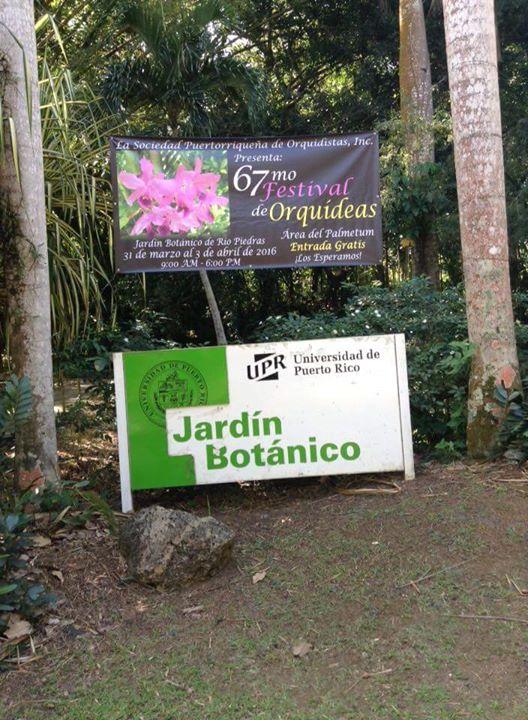 Festival de orquidistas at jardin botanico de rio piedras for Rio grande arts and crafts festival 2016