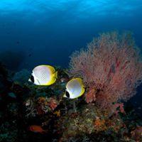 Yleisluento Vedenalaiskuvia Malaijien saaristosta