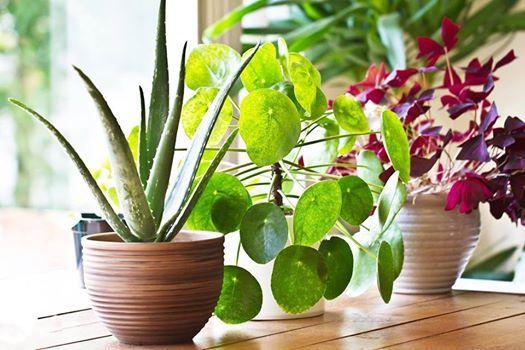 Store Plantedag med Hjemmebag