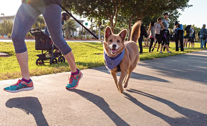 12th Annual Run for the Paws