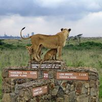 Nairobi National Park  Giraffe Center Madaraka Day Getaway