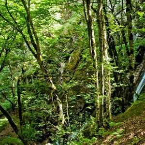 Dilman waterfall easy hiking trip