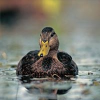30th Annual Pembina Triangle Ducks Unlimited Banqet