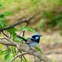 KBCB Bird Observation Walk - November