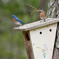 Woodworking for Wildlife Series - Birdhouse