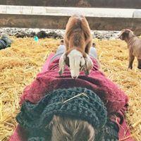 Goat Yoga (Haute Goat Barn)