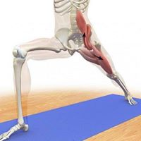 PraticaMente yoga Risveglio e Allenamento dello PSOAS &quot