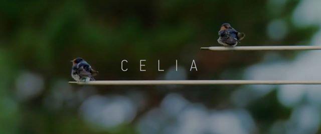 Wadestown PTA - Celia