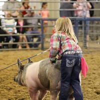 5 State Fair Livestock Show
