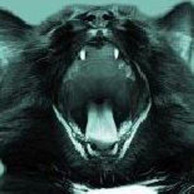 The Black Cat House