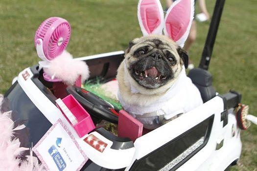 Easter PUG Meet-up