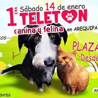 Evento de la 1ra Teleton Canina &amp Felina - Arequipa