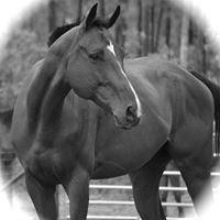 How to Adopt a Horse -an ASPCA Help a Horse Day Event
