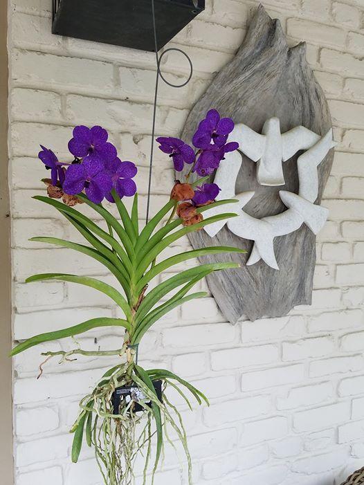 Through the Garden Gate Flower Show at Delaware Center for ...