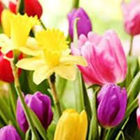 Horncliffe Spring Bulb Show