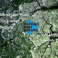 Defend Our Trees Tree Canopy Spotlight