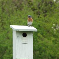 Bluebird Trail Walks - Tuesday mornings in May