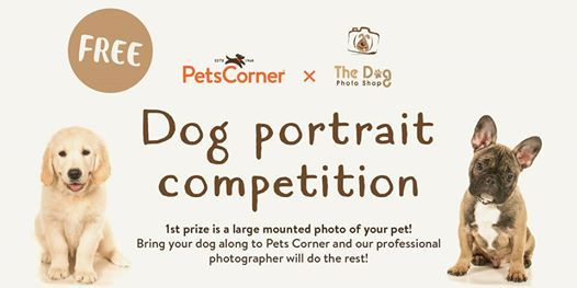 Dog Photo Competition - Pets Corner Andover
