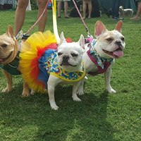 Woofstock benefiting the Humane Society of Naples