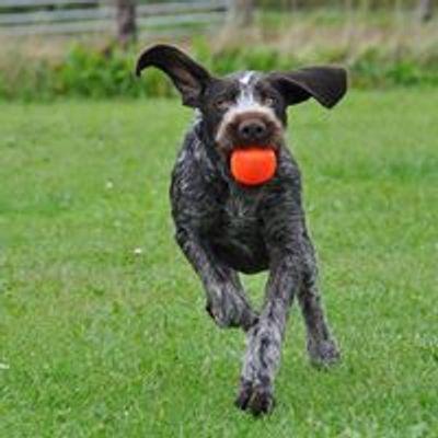 Hundetræning - Enghave Wellness