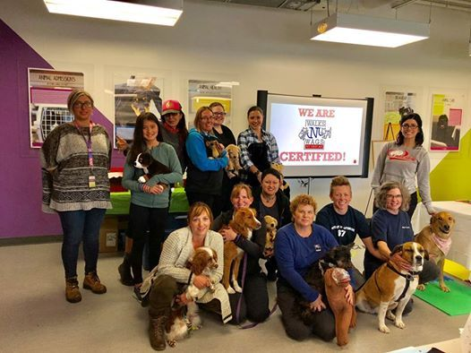 Walks N Wags Pet First Aid Course