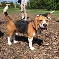 Alexandria Beagle Meetup