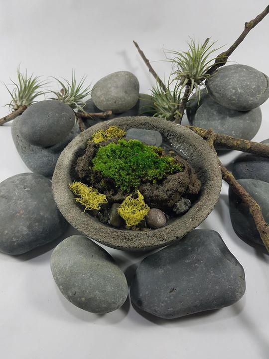Wabi Kusa: Japanese Water Garden Workshop