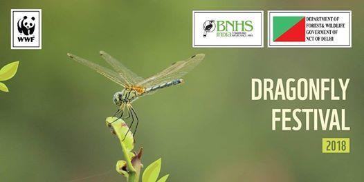 Dragonfly Festival 2018