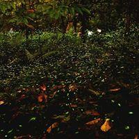 Fireflies Camping &amp Sandhan Valley Rapling