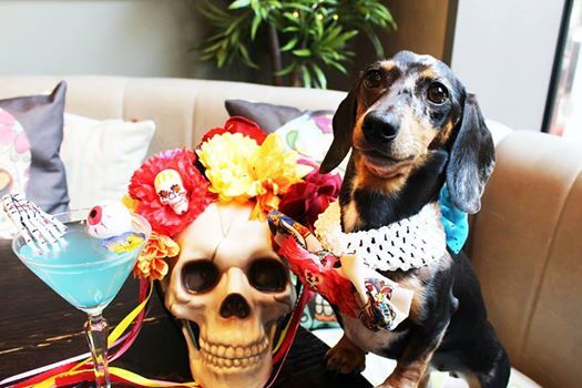 Day of the Dead Dachshund Cafe Manchester