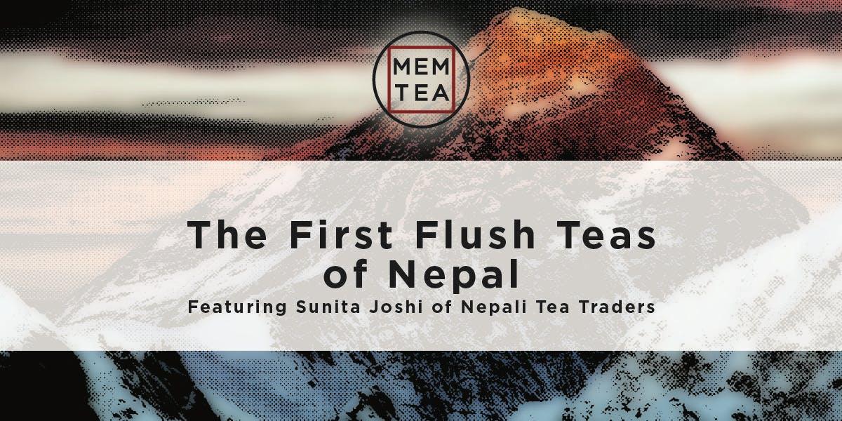 The First Flush Teas of Nepal at Mem Tea Imports, Cambridge