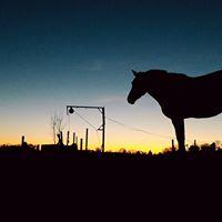 Schsisch - Thringischen Pferdetag