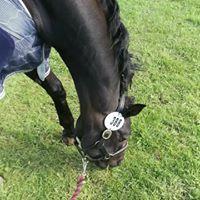 Park End Equestrian Training Centre