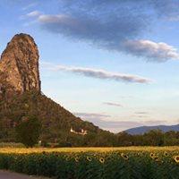 Beginners Rock Climbing and Sunflower Tour Lopburi Thailand