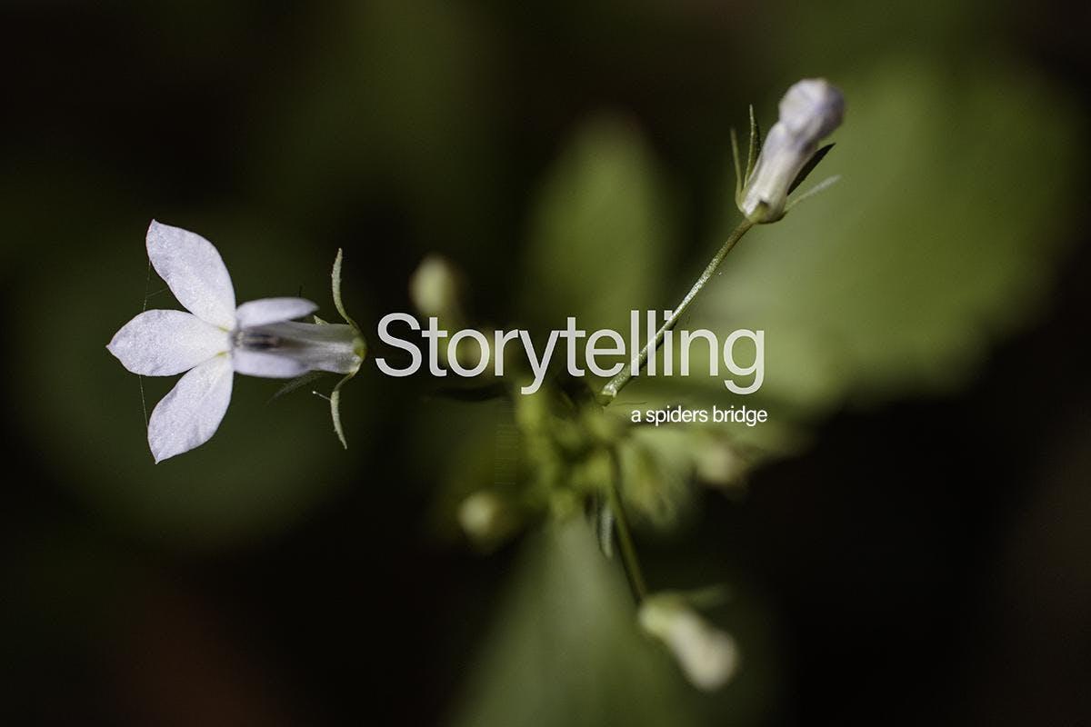 R  A  W Photography Series  Exploring Fickett Hammock