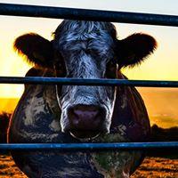 MixTree Docs Cowspiracy - The Sustainability Secret