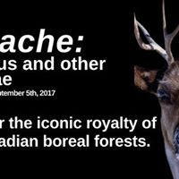 Panache Caribous and Other Cervidae Exhibition Opening