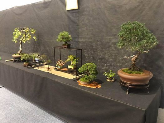 Spring Bonsai Exhibition