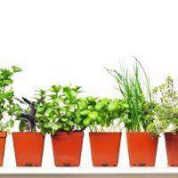 Herb Day Celebration Plant Sale