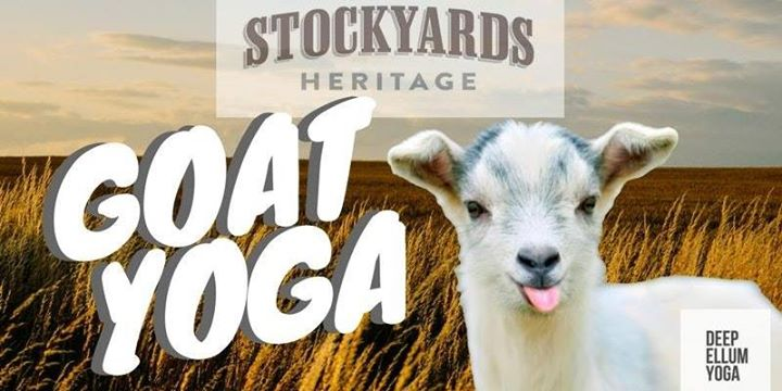 Goat Yoga at the Stockyards