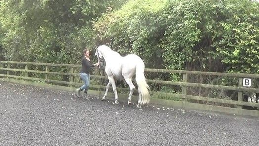 The Balanced Horse - Private Lessons - Winchester