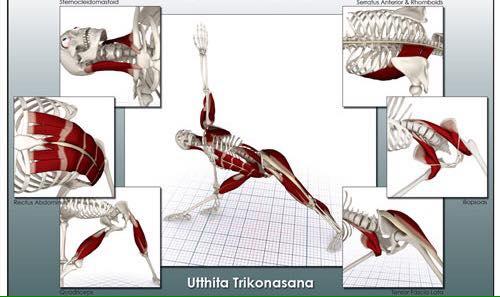 Taller anatomia del asana para profesores de Hatha Yoga at Estudio ...