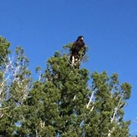 Flagstaff Festival of Science - Birding for Raptors - FULL - Waitlist Only