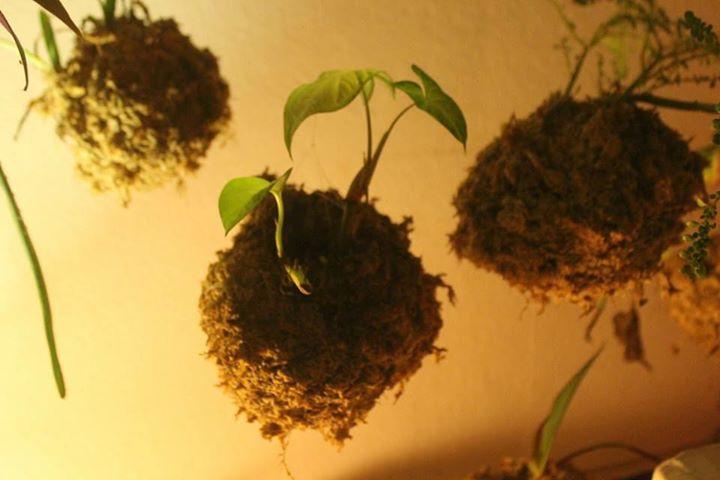 Atelier Kokdama 2 plantes