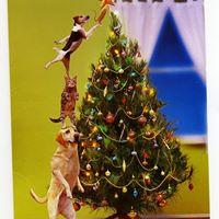 Jackson Giant Christmas Tree Sale